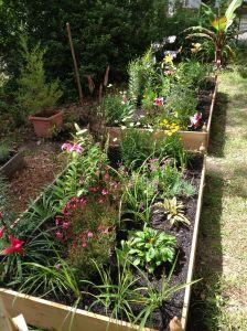 Transferred plants.
