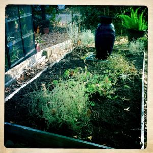 Herb garden with recycled soil added.