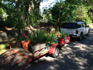 A friend lent me the use of their trailer and vehicle to move plants, etc.