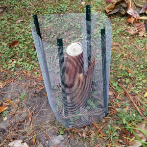 Metal garden posts with chicken wire makes an excellent enclosure.