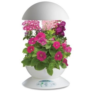 This is the model I have on my desk at work. I just planted the mini red petunia's.