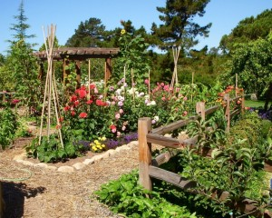 Example of a combination garden. (Found on Pintrest.)