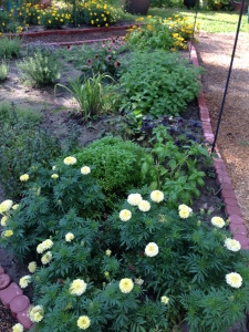 Marigolds and herbs.