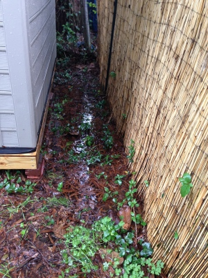 Standing water around the garden shed.