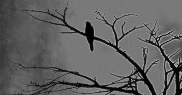 bird-in-tree_darkness