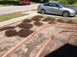 adding_compost